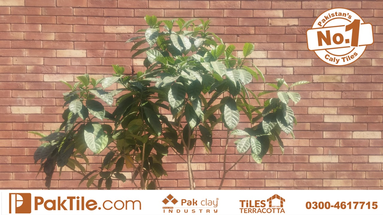 gutka tile rate in lahore